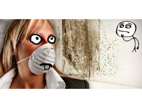 Как убрать запах сырости